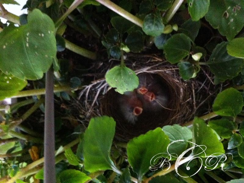 Beth Rayann Corder | Ways to Settle into Nesting Naturally