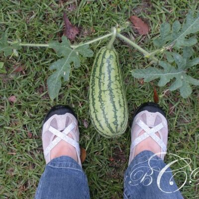 Beth Rayann Corder | Gardening with Great Expectations for Harvesting