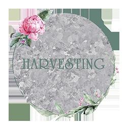 Beth Corder | Galvanized Gardens: Harvesting